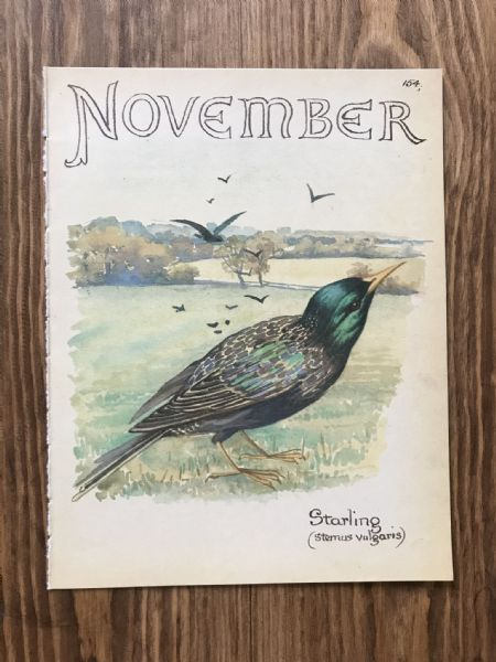 November - Country Diary of an Edwardian Lady - Book Page -
